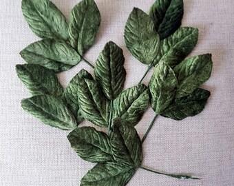 Velvet leaves, dark olive green