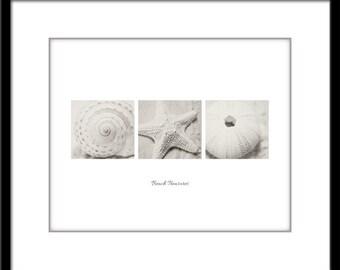 Shell Photo - Starfish Photo - Minimalist Photo - Poster - Shell - Starfish - Fine Art Photography Print - Black & White Modern Decor