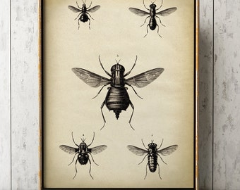 Insects print, Insect poster, fly print, fly poster, fly insects chart, fly poster, insect wall art, aged sepia black and white
