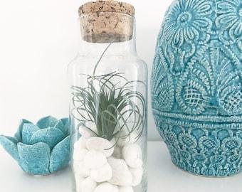 plant terrarium, glass terrarium, terrarium, gifts for her, home decor, gift idea, housewarming, decoration, succulent terrarium, air plant
