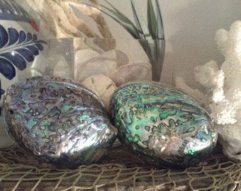 Australian Paua Abalone Shell Highly Polished Iridescent Tones Shiny Sea Blue Green Silver Seashell Collectibles Collection Decor Display