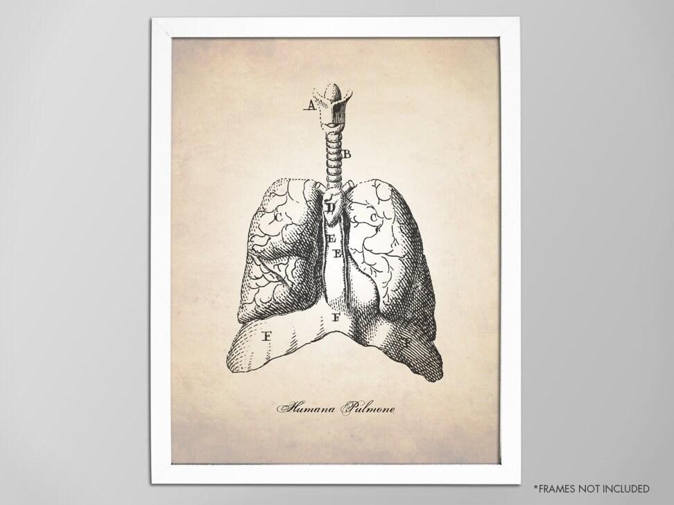 Menschliche Anatomie Lunge Kunstdruck medizinische