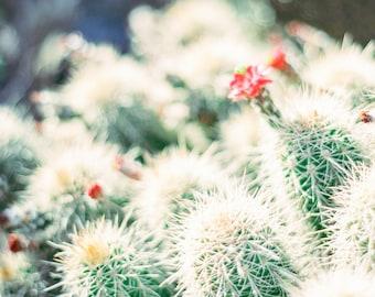 Cactus print, cactus fine art print, desert photo print, Arizona print, Southwestern decor