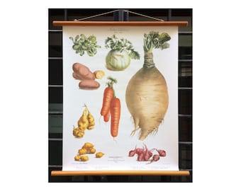 Vegetables school poster - Vintage french item