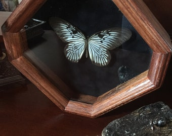 Large Butterfly in Wooden Octagonal Frame