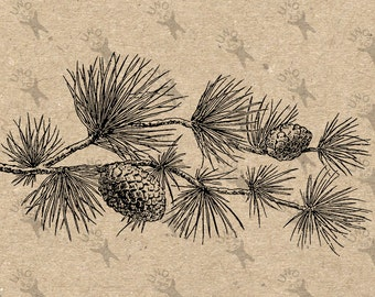 Vintage image Tree Pine Pine cone Instant Download picture Digital printable clipart graphic  Burlap Fabric Transfer Iron On Pillows 300dpi