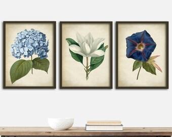 Botanical print SET of 3 art posters, botanical kitchen decor, botanical  instant collection, flowers print set