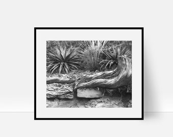 Nature Print, Roots Print, Nature Photography, Nature Wall Art, Nature Art Black and White, Photography, Tree Print, Tree Roots, Stone Wall