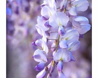 WISTERIA Vines Stem beautiful Purple Lavendar floral photo FLOWER photography ART Wall Decor