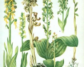 WILD FLOWERS Vintage Botanical Print Antique, yellow plant print 45  botanical print, bookplate art print, herb plants plant wall print