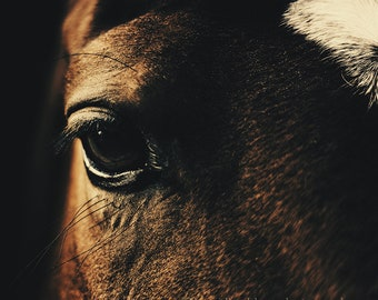 horse photography, horse art, wild brown horse print, fine art equine photography, equestrian decor, equestrian home decor, horse wall decor