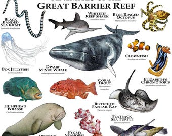 Marine life of the Great Barrier Reef