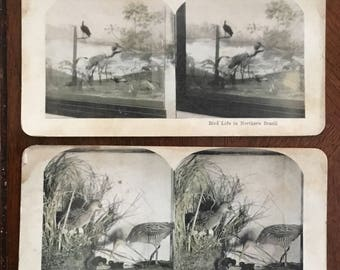 Set of 4 vintage stereo-views-zoo-animals-Beisa antelope-birds-northern Brazil-King Rail-polar bears-late 1800s-early 1900s-photos-antique