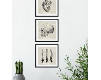 SET of 3: Doctor's Office Art, Anatomical Heart Print, Vintage Medical Illustrations, Skull Poster, Spine Illustration, Anatomical Brain