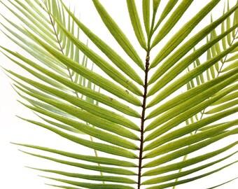 Silk flower arrangement, palm leaf, palm tree, faux palm, tropical leaf, faux plant, jungalow, tropical decor, greenery, centerpiece