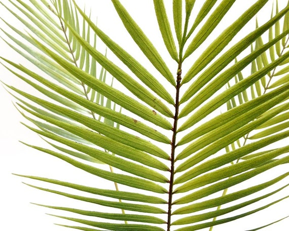 Silk flower arrangement palm leaf palm tree faux palm silk flower arrangement palm leaf palm tree faux palm tropical leaf faux plant jungalow tropical decor greenery centerpiece mightylinksfo Gallery