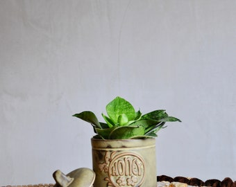 Vintage hand thrown honey pot, honey jar, pottery honey pot - succulent pot, succulent holder, handthrown, zero waste, boho decor jungalow