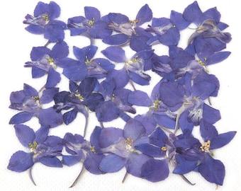 Pressed flowers, blue larkspur 20pcs for floral art, craft, card making, scrapbooking
