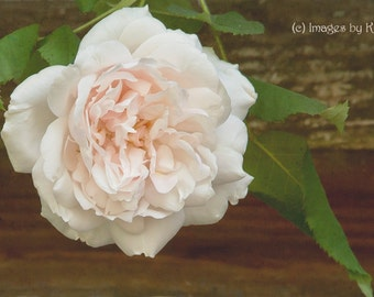 Flower photography, Blush Rose Photography - Fine Art Photography