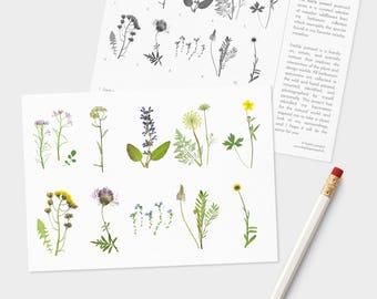 Meadow Postcard Set - Pack of 10