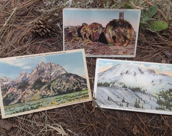 Lot of Three Assorted Vintage National Park Postcards