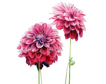 Dahlia Botanical Watercolour Art Print, Botanical Illustration, Home Decor, Watercolor Art Print, Flower Painting, Pink Flower Print, Gifts