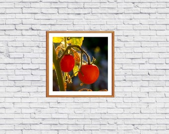 Photography digital image of tomatoes artwork