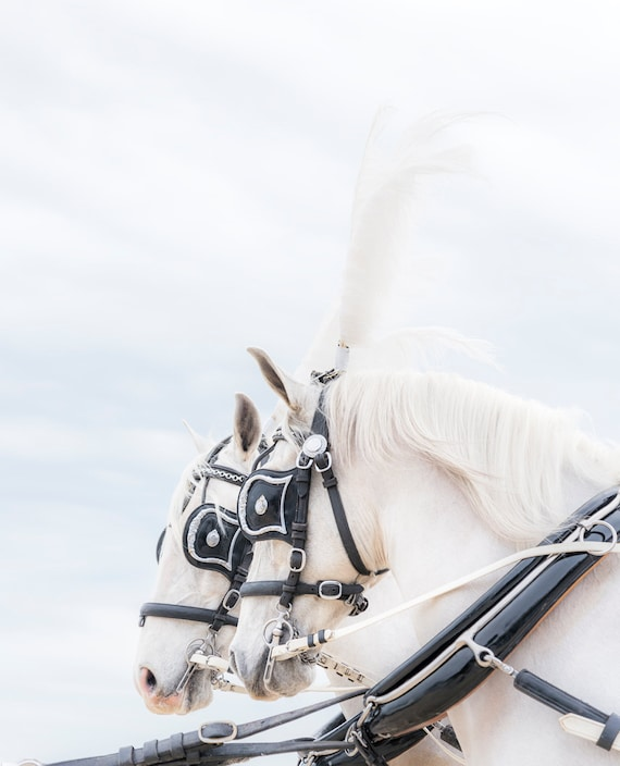 ANGELS 2. White Horse, Equine Print, Horse Photography, Limited Edition print, Photographic Print.