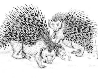Porcupines in the snow print