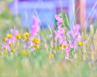 Colorado Wildflowers Photography 11 x 14 Print Wildflower Picture