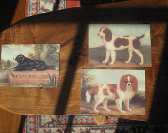 150 Reproduction Postcards of Antique Dog Illustrations Printed in Italy