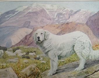 PYRENEAN SHEEP mountain dog Louis Agassiz Fuertes Vintage Mounted 1919 plate print Congratulations Christmas Thanksgiving Birthday gift