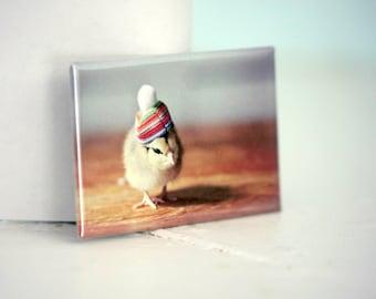 Chicks in Hats Rigid Rectangle Refrigerator Magnet Chicken Rainbow Pom Pom Hat