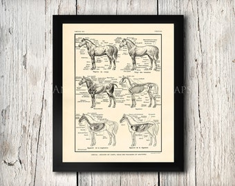 Anatomy of Horses Muscles Skeleton etc Equine Veterinary Photo Poster Print Sizes 8x10 to 24x30 Unusual Gift
