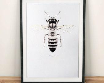 Honey bee art print. Honey bee illustration. Bee print. Metallic gold. Vintage insect print. Scientific illustration. Vintage bee. Bees.
