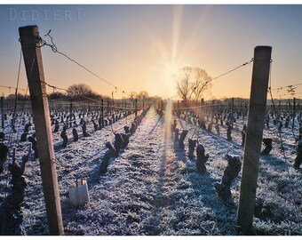 Print color: Sunrise in the vineyards of Gevrey Chambertin