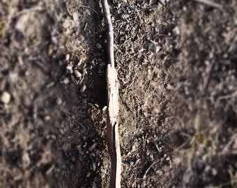 LETTER T Natural Outdoor Nature Rocks Photography Fine Art Print Scott D Van Osdol Sticks Twigs Ground Dirt Spelling Initials Name Family