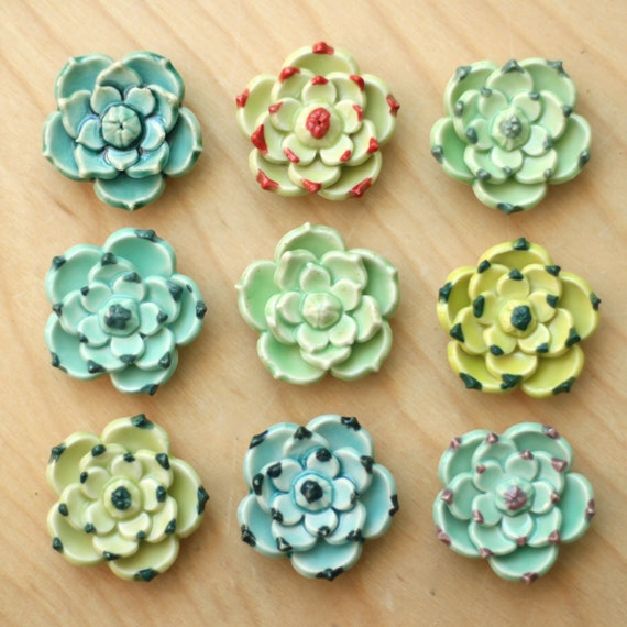 succulent magnet, choose your favorite