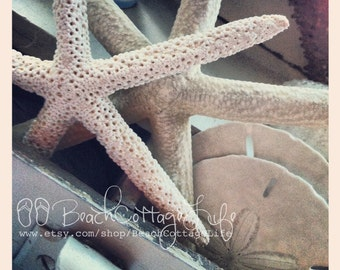 Sand Dollars and Starfish Seaside Treasures / Shabby Chic Coastal Living, it's a Beach Cottage LIfe Style square shore house photography
