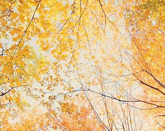 Autumn photography 11x14 fall wall art autumn photo primitive fall decor nature photography autumn leaves photo blue orange yellow