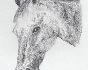 Horse Stationary Appaloosa