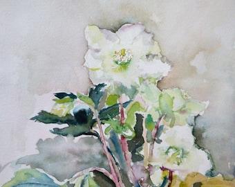White Hellebore/Spring Flowers Watercolour