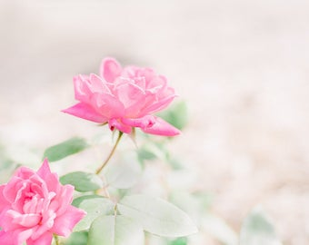 Lovely roses in my garden-flower photography - flower photo- cottage garden- roses - Original fine art photography prints - FREE Shipping
