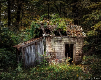 Rustic Old abandoned shack in the woods during the autumn season. Vibrant color and a spooky mysterious scene.
