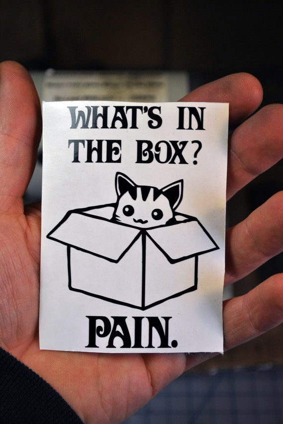 Whats in the box pain dune cat vinyl sticker decal