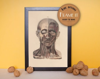 "Vintage illustration of Muscles of the Face - framed fine art print, art of anatomy, 8""x10"" ; 11""x14"", FREE SHIPPING - 186"