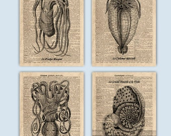 Octopus Art, Squid Decor, Vintage Octopus Squid Art, Nautical Decor, Cephalopod  Nautical Art, 4 Sea Life Prints, Educational for kids
