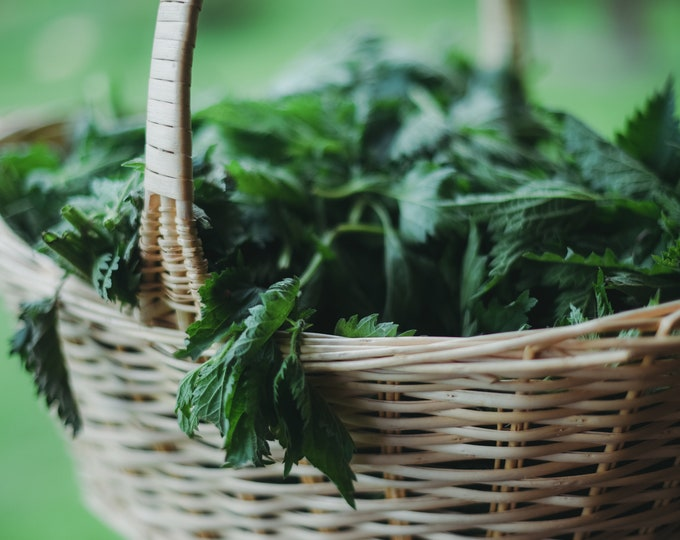 wild + fresh stinging nettle elixir and tincture
