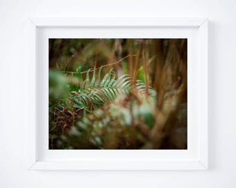 Fern print - British Columbia nature photograph - Vancouver Island photo - Large plant wall art - Canada fine art photography - Cabin decor