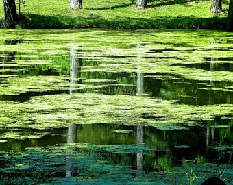 Strawberry Pond Reflection Fine Art Photograph Abstract Nature